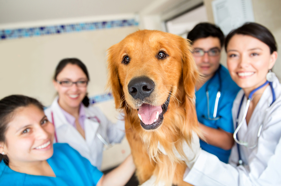 bigstock-Cute-dog-at-the-vet-with-a-gro-43963894