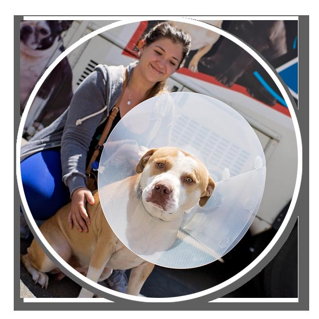community-service-volunteer-get-involved-animals-pets-spay-neuter