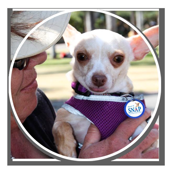 friends-of-snap-volunteer-get-involved-animals-pets-spay-neuter