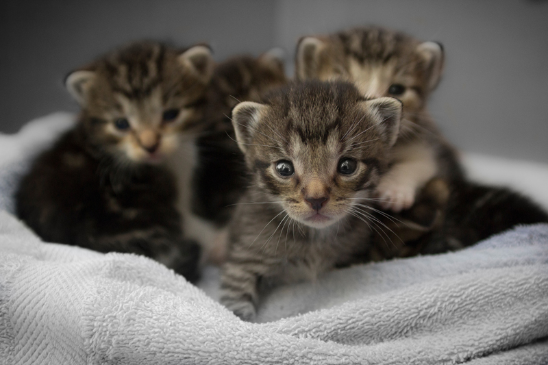 Kittens-SNAP-Spay-Neuter-Low-Cost-San-Diego