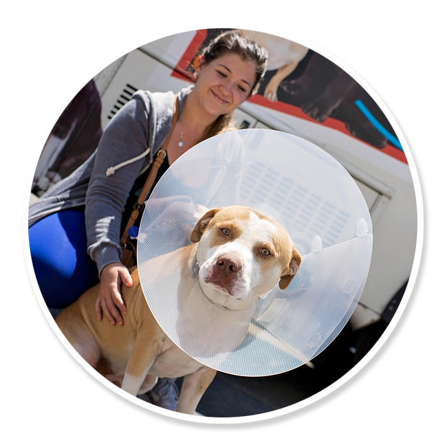 community-service-volunteer-get-involved-animals-pets-spay-neuter