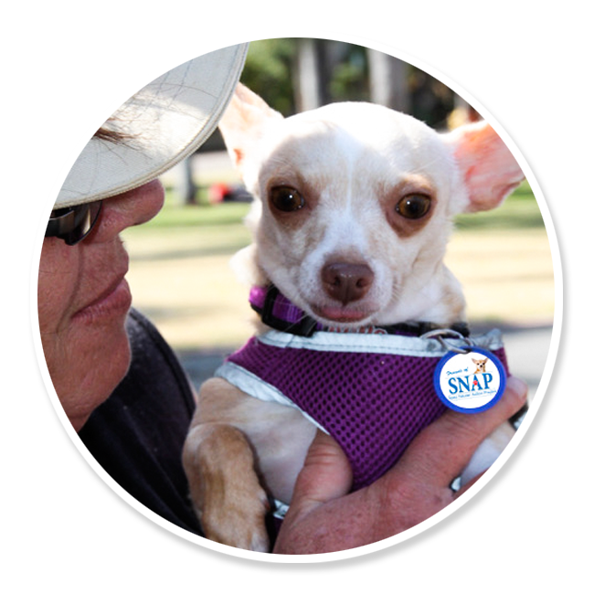 friends-of-snap-volunteer-get-involved-animals-pets-spay-neuter